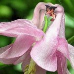 How-do-you-take-care-of-swan-orchids